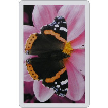 Butterfly Single playing card deck - Red Admiral
