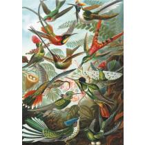 Humming Birds Puzzle