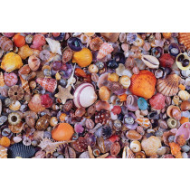 Sea Shells Puzzle